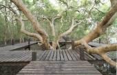 Walk way through mangrove forest — Stock Photo