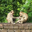Monkey flock on old tiled roof — Стоковое фото #77690002