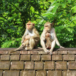 Monkey flock on old tiled roof — Стоковое фото #77690038