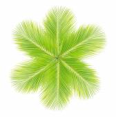 Green coconut leaf on white background — Stock Photo