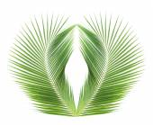 Green coconut leaf isolated on white background — Stock Photo