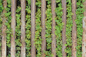 Weeds and rusting steel bar — Stock Photo