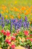 Flowers field background. — Stock Photo