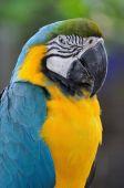 Krásný papoušek pták — Stock fotografie