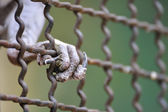 Bird claws catch cage — ストック写真