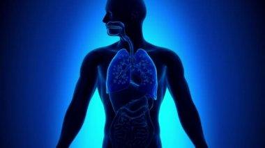 Bronquiolite - inflamação dos bronquíolos — Vídeo stock