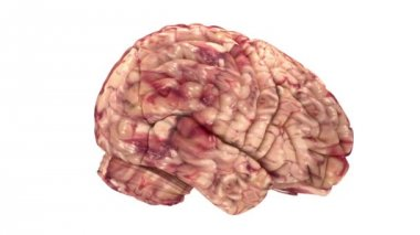 Anatomy Brain - Isolated on White — Stock Video