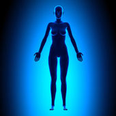 Full Female Body - Front View - Blue concept — Stock Photo