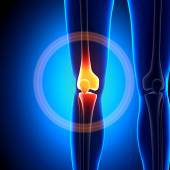 Female Knee Joint - Anatomy Bones — Stock Photo