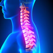 C7 Disc - Cervical Spine — Stock Photo