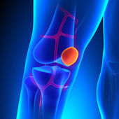 Patella Anatomy Knee Bone with Ciculatory System — Stock Photo