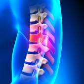 T7 Disc - Thoracic Spine Anatomy — Stock Photo