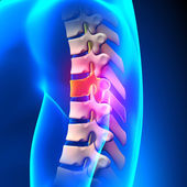 T6 Disc - Thoracic Spine Anatomy — Stock Photo