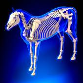 Horse Ligaments and Joints Tendons — Stock Photo
