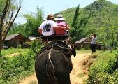 Travel on the elephant — Stock Photo