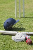 Cricket — Stock Photo