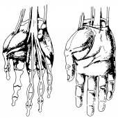 Arm Draw 01 — Stock Vector