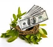 Money In Nest — Stock Photo