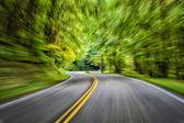 Speeding Through The Forest — Stock Photo