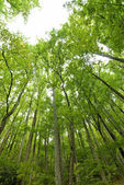 Forest Looking Up Toward The Sky — Stock Photo