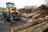 Forklift With Logs In Area Of Lumber — Stock Photo