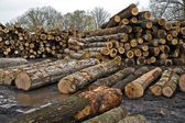Logs Awaiting Trip To Sawmill — Stock Photo