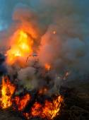 Big fire in the village — Stock Photo