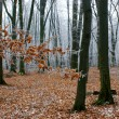 Frozen leaves on the branches in the forest — Stock Photo #53586279
