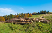 Tree logs — Stock Photo