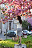 Young woman posing near big sakura tree — Stock Photo