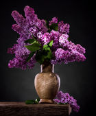 Blooming branches of lilac in vase — Foto Stock