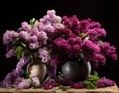 Blooming branches of lilac in vases — Stock Photo