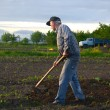 Farmer hoeing vegetable garden — Stock Photo #72968725