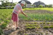Poor farmer hoeing vegetable garden — Stock Photo