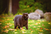 Angry cat outdoors in autumn — Stock Photo