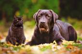 Dog and cat outdoors — Stock Photo
