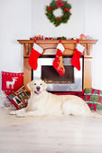 Dog by a christmas decorated fireplace — Stock Photo