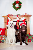 Two Dogs by a christmas decorated fireplace — Stock Photo