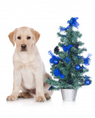 Yellow labrador puppy with christmas decoration — Stock Photo