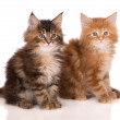 Adorable two months old maine coon kitten — Stock Photo #67640065