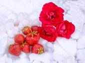 Strawberries and roses lying in the snow — Stock Photo