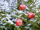 Christmas Red Ball hanging on  snow-covered fir branch — Stock Photo