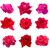 Collage of nine pink roses — Photo