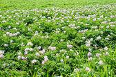 Organik tarım — Stok fotoğraf