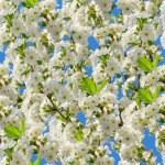 Cherry blossoms seamless pattern — Stock Photo #69558039