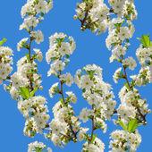 桜の花のシームレスなパターン — ストック写真