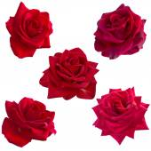 Collage of five red roses — Photo