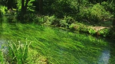 Krka River in forest — Stock Video
