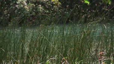 Green grass Krka river — Stock Video