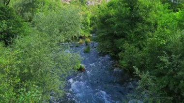 Krka river flow through the bushes — Stock Video